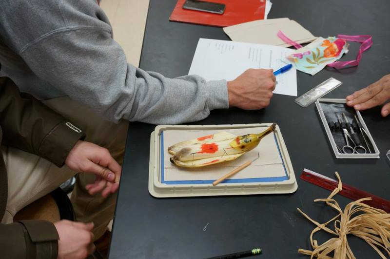 students dissecting a banana