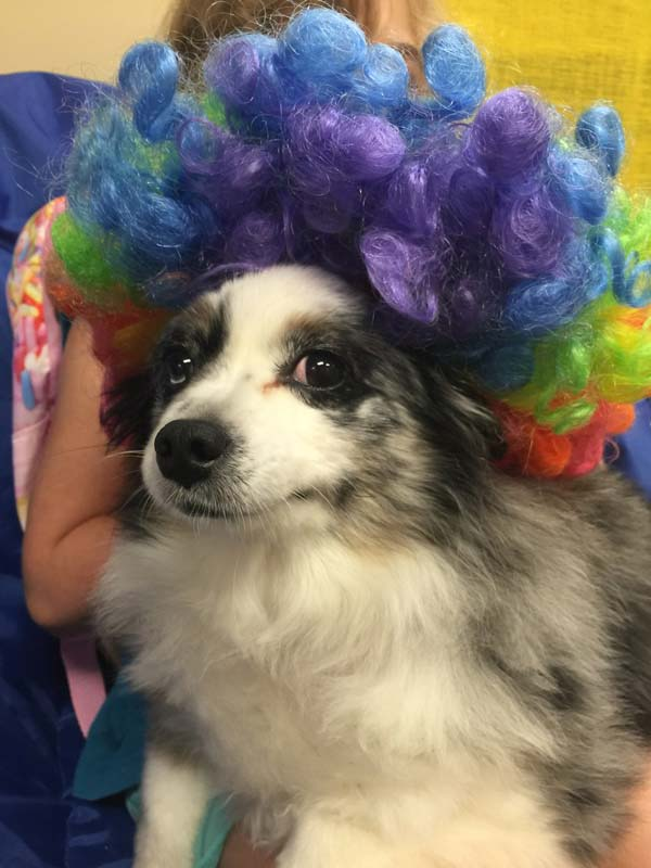 On Fridays, Mrs. All's toy Australian Shepard, Skye, visits the school to celebrate the winners on the morning news show.