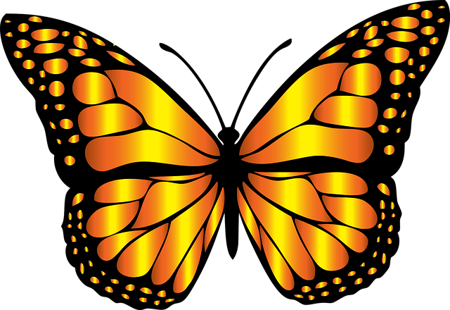 Monarch butterfly with orange shimmering wings